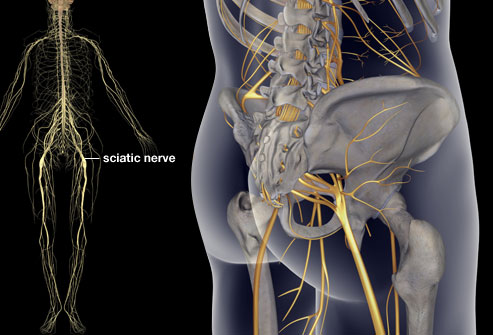 The Secret Information To The Sciatic Nerve